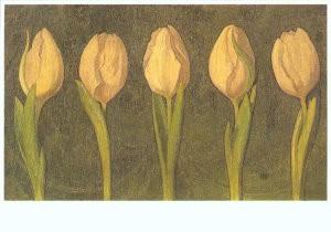 Gijs Bosch Reitz (1860-1938) -Vijf witte tulpen- Postkaart
