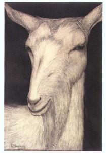 Jan Mankes (1889-1920) -Geit 1914- Postkaart