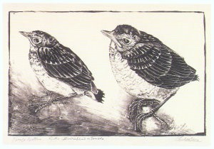Chris le Roy (1884-1969) -Jonge lijsters- Postkaart