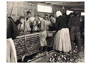 Lewis Hine(1874-1940) -Shucking Oysters- Postkaart