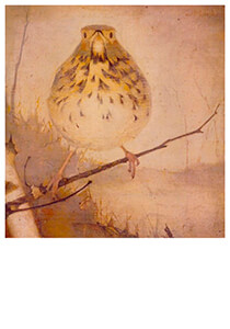 Jan Mankes(1889-1920) -Lijster op tak, 1910- Postkaart
