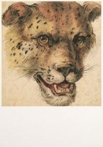 Cornelis Saftleven (1607-1681)-C.Saftleven/Kop luipaard/AHM- Postkaart