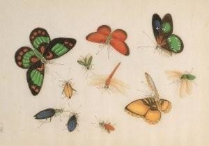 Anoniem -Vlinders, uit album met Chinese schilderingen- Postkaart