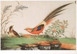 Anoniem -Vogels,Chinese schildering/SGM- Postkaart