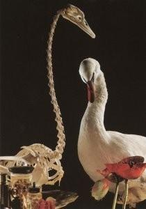 Erik Hesmerg (1951) -E.Hesmerg/Fries Natuurmuseum- Postkaart