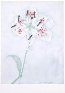Mondriaan (1872-1944)Mondrian -Lelie- Postkaart