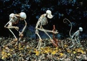 Anoniem -Skeletten, mens, Homo sap- Postkaart