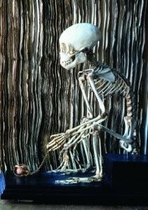 Anoniem -Skelet aapje- Postkaart