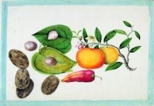 Anoniem -Vruchten uit album Chinese sch- Postkaart