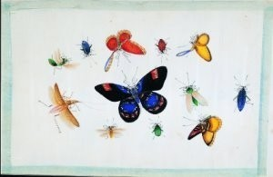 Anoniem -Vlinders uit Album Chinese sch- Postkaart