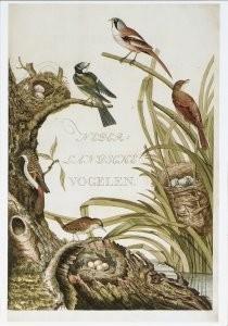 C.Nozeman (1727-1786) -Nederlandsche vogelen, Te Amsterdam- Postkaart