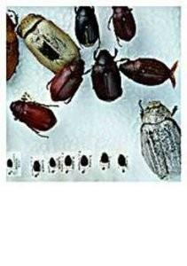 Nicole Segers (1960) -Div.Kevers- Postkaart