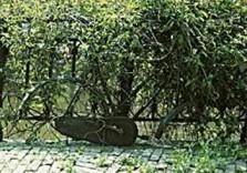 Tim Killiam (1947-2014) -Green Bicycle, Holland- Postkaart