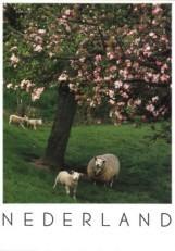Igno Cuypers -Lente- Postkaart