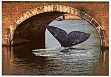 Tim Killiam (1947-2014) -Vistory, Surprising Holland- Postkaart