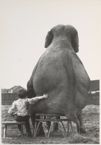 Mike Hollist -My pal the elephant- Postkaart