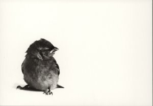Hans Dehe (1945) -Mus 1- Postkaart