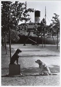 Rolf Adlercreutz -Dog meets dog- Postkaart