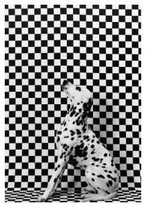 Gert Weigelt (1943) -Dalmatian- Postkaart