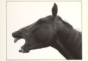 Rene Jansen (1969) -Untitled- Postkaart