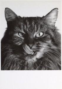 Rune Saevig (1965) -Pussycat- Postkaart
