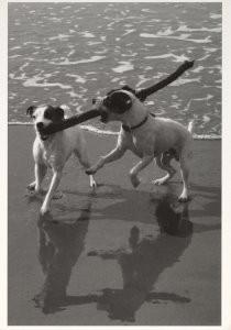 Loes Schleedoorn -Ik wou dat ik twee hondjes was...- Postkaart