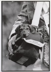 Buschman Velbert -Dog in a bag- Postkaart