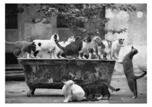 Albrecht Schnabel -Die Verzauberte Badewanne- Postkaart
