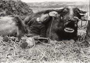 Fu Chun Wang -Tending Buffalo- Postkaart