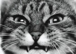 Miklos Teknos -Bad-Cat- Postkaart