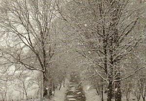 Rolf Unger -Winterwonderland- Postkaart