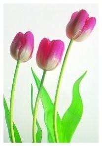 Paul Huf (1924-2002) -Flowerpower no. 6- Postkaart