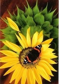 Eduard van Koolwijk -Atalanta, 2004- Postkaart