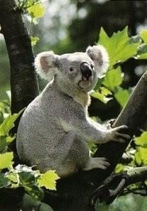 Ron Entius -Australian nature- Postkaart