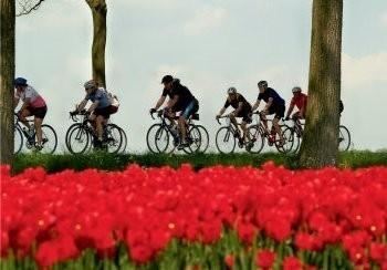 Henk P. Drost -Tour de tulipe, 2008- Postkaart