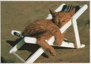 Sipa Press, -Sunshine / Cat in sunshine- Postkaart