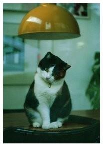 Brian Quinn -Kat- Postkaart