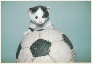 Ronald Hammega (1948) -Katje op voetbal- Postkaart
