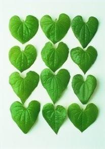 Letizia Volpi -Leaves- Postkaart