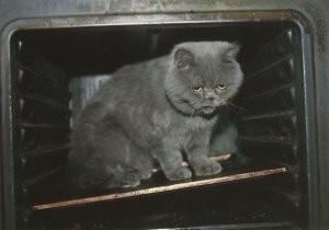Jeroen Hammega -J.Hammega/Hot cat.- Postkaart