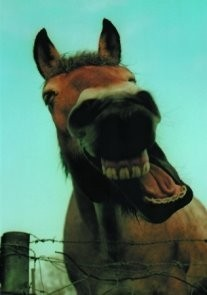 Peter Huls -P.Huls/Het grinnekende paard.- Postkaart