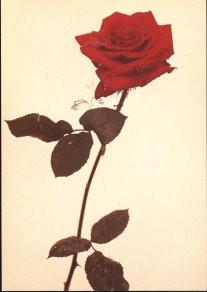 Paul Huf (1924-2002) -Samen uit... Ja, gezellig- Postkaart