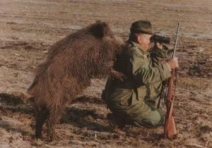 Sandor Szabo -Wild-Boar hunting- Postkaart