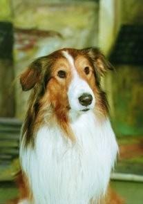 Dirk de Herder (1914-2003) -Lassie- Postkaart