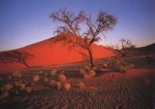 Mark Downey -M.Downey/Namibian Landscape- Postkaart