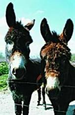 Loes Schleedoorn -Harrie&Hannie- Postkaart