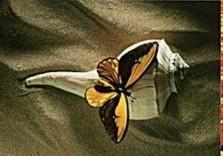 Paul Huf (1924-2002) -Naturalis, 1993- Postkaart