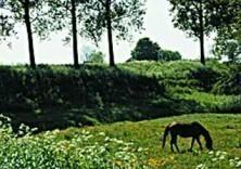 Paul van Riel (1948) -Lente in holland- Postkaart