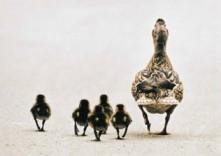 Wim van der Burgh -Ducky day- Postkaart