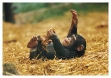 Mike Hollist -Hapiness is a Chimp- Postkaart